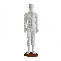 Ihmiskehon akupistemalli (60 cm)