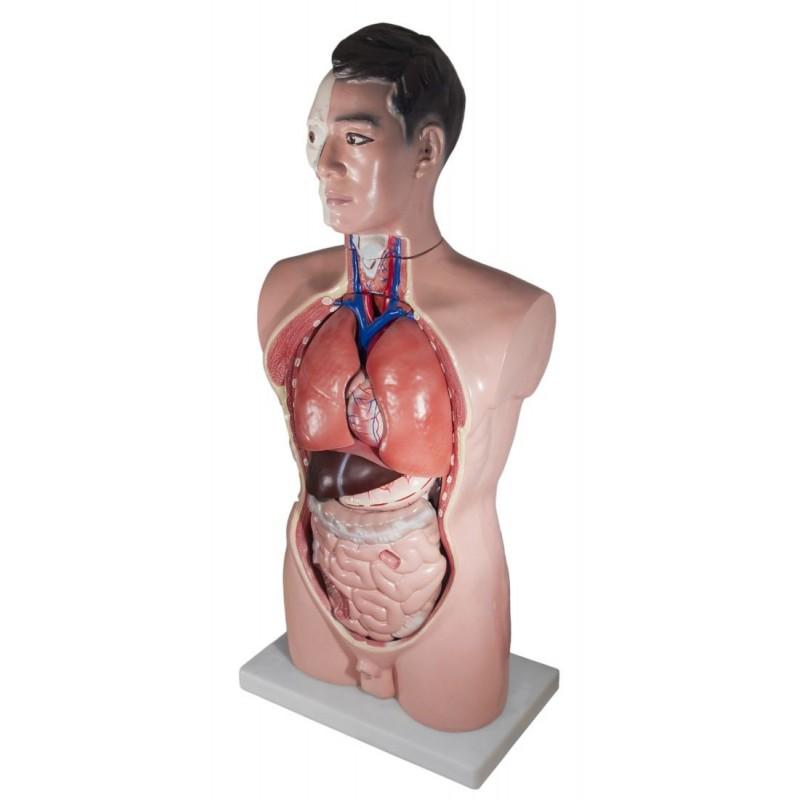 16-osainen ihmiskehon mallinukke